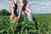 Veilig werken met gewasbeschermingsmiddelen