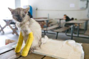 Twee gebroken benen is bewust roekeloos?