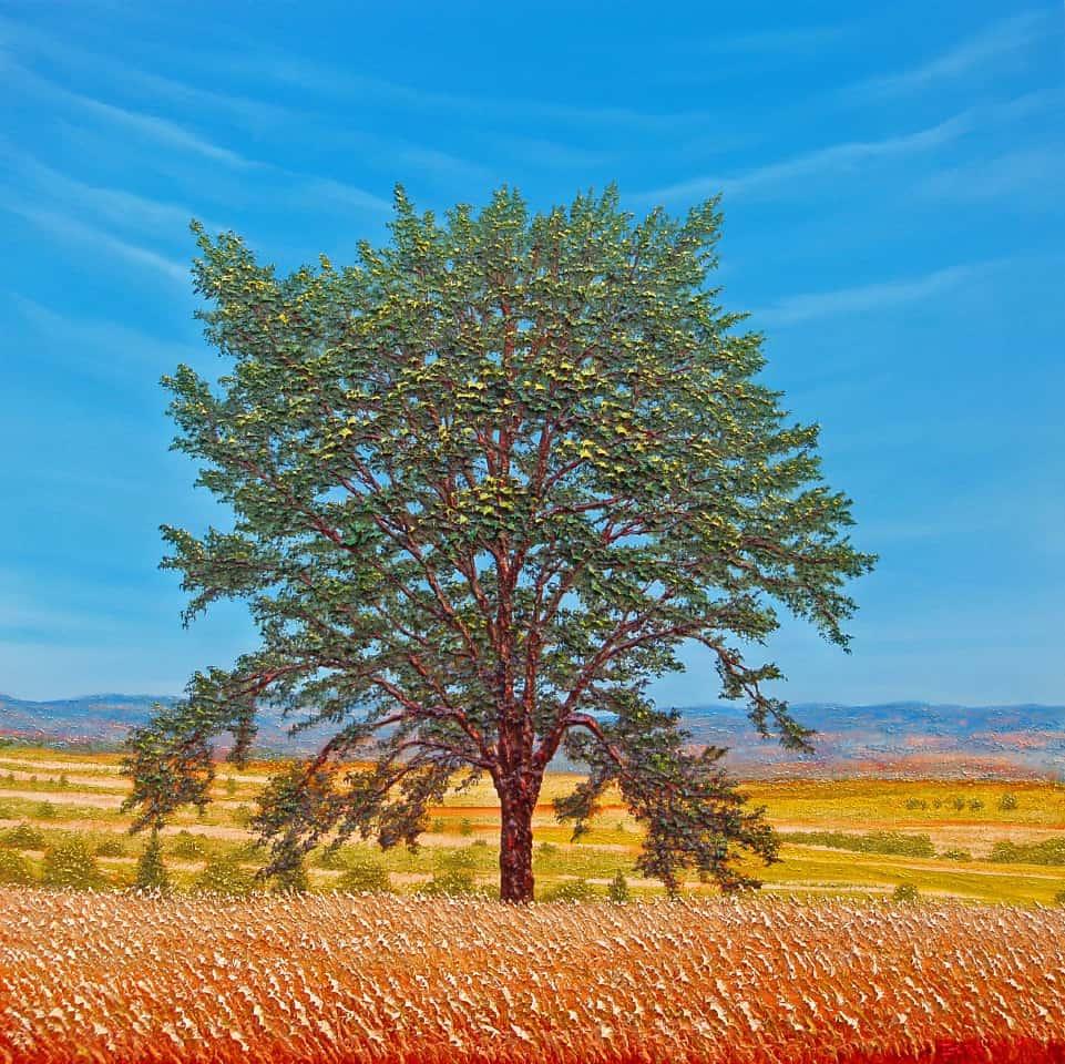 Bella quercia cm 80x80- Quadro Pg anno 20121