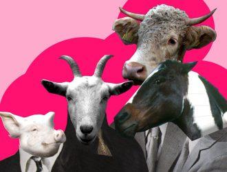Transumanza Express, il primo lavoro dei Bestiame