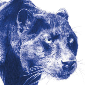Detalle de ilustración realista a bolígrafo Bic azul de una chica rodeada de panteras
