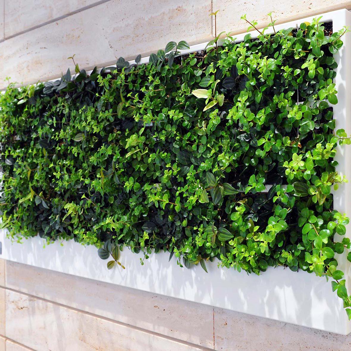 Hydroplant pflanzen innenbereich i bei bestswiss for Pflanzen innenbereich