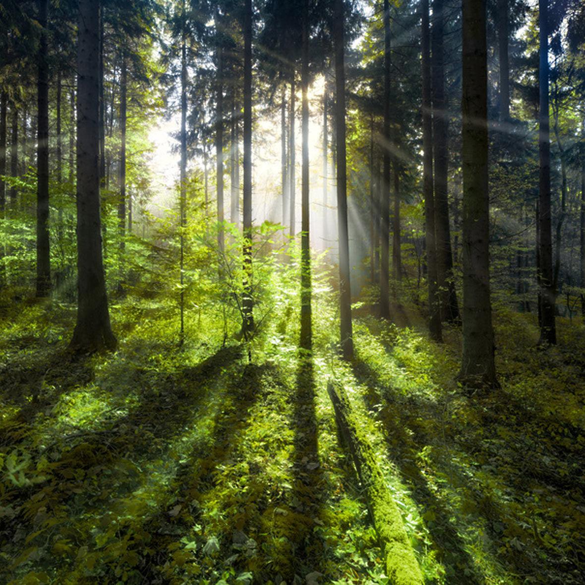 Nachhaltigkeit Ein Modewort I Stories Bei Bestswiss Nachhaltige Entwicklung Jetzigen Bedurfnisse Befriedigt