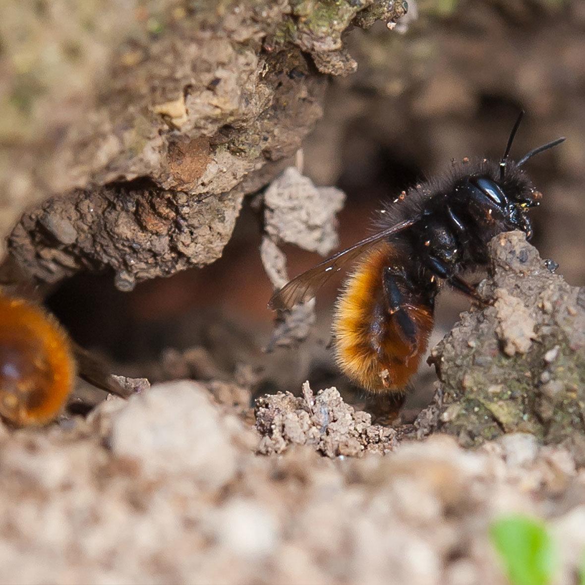 Bienen Partner beehome wildbienen kaufen i bei bestswiss