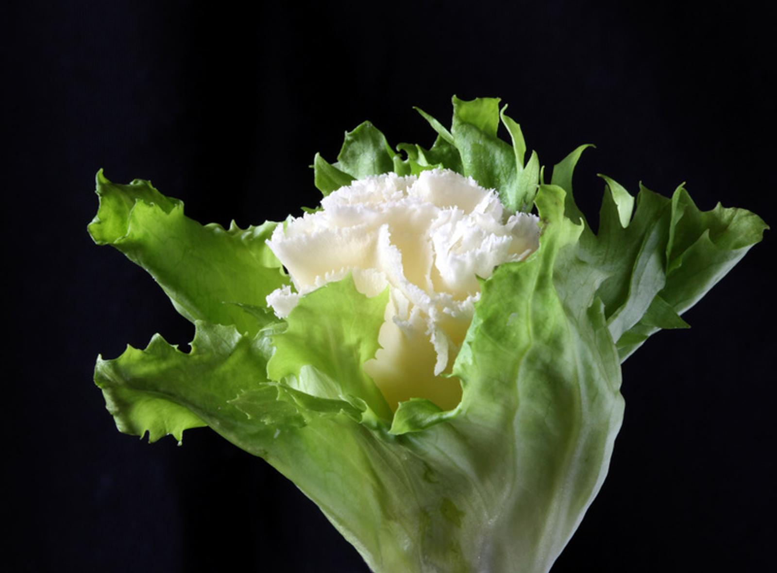 tete-de-moine-rosette-salatblatt-blog