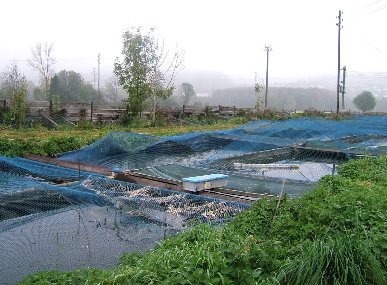 Biofischzucht Nadler Rohr – nachhaltiger Fisch