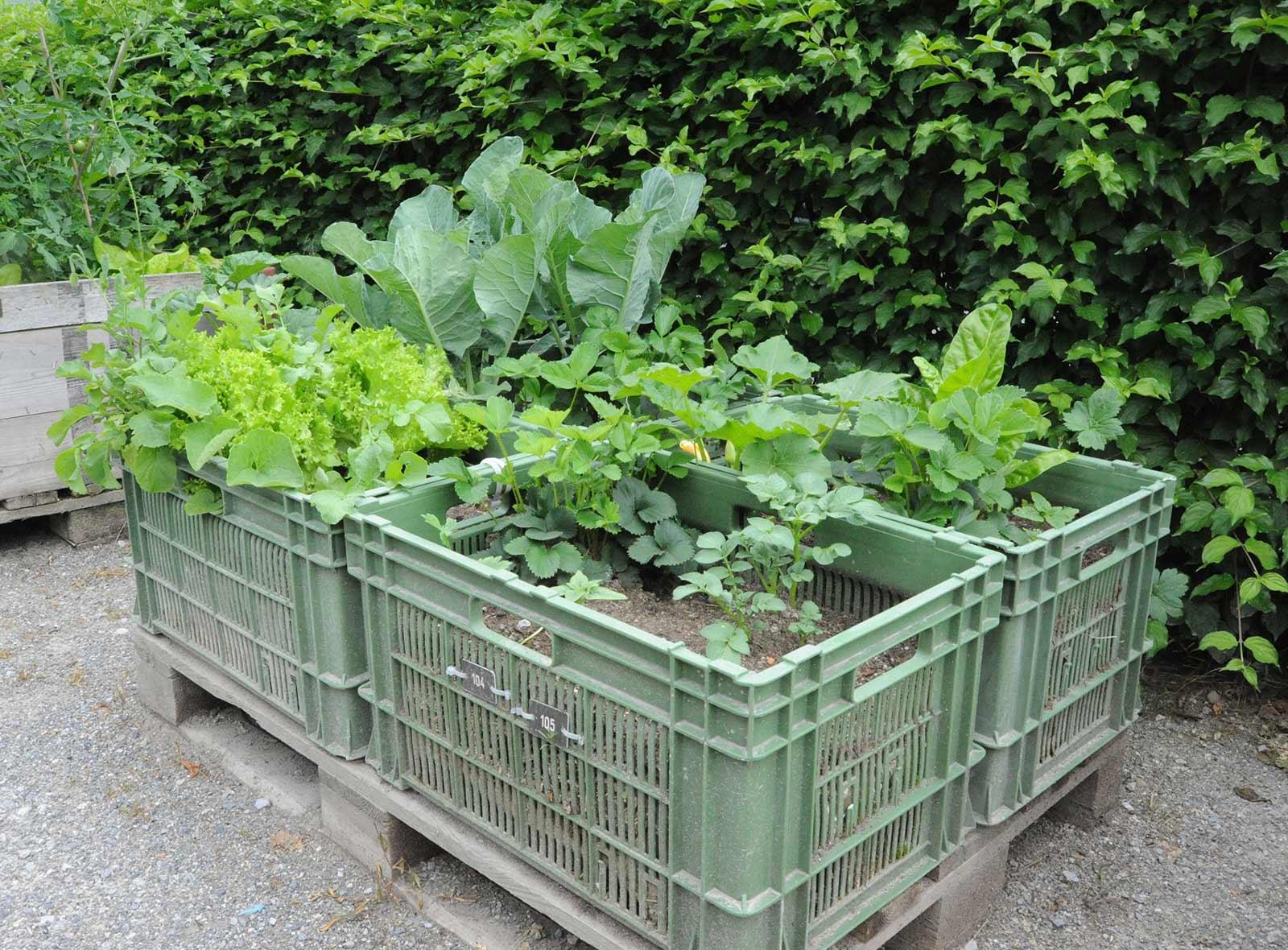 Urban Gardening Stadt Bern