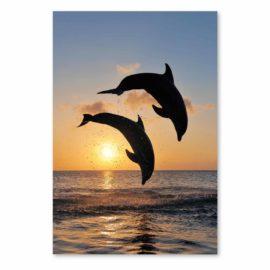 Blankokarte Delfine