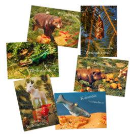 postkarten set wilde weihnachten freshfish