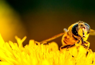World bees 1500x800