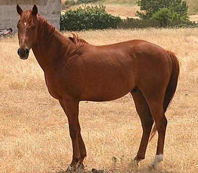 mondo-dell-and-rsquo-allevamento-del-cavallo-anglo-arabo-al-collasso-presidente-scrive-a-mattarella