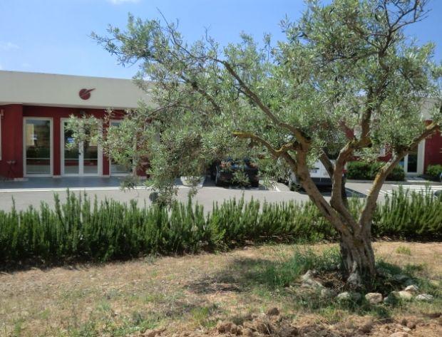 Villa degli ulivi inaugurato il giardino dei malati di for Il giardino degli ulivi monteviale