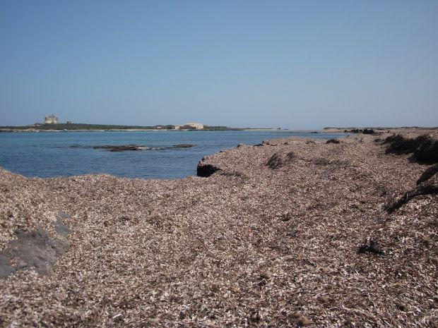 posidonia-spiaggiata-progetto-coldiretti-per-il-riutilizzo