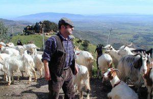 latte-gruppo-pastori-abbandona-tavolo-in-regione