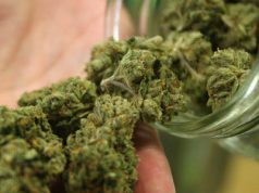 in-un-bidone-nascosti-1-6-kg-di-marijuana-a-escalaplano