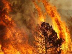 fiamme-nella-zona-macchiareddu-interviene-corpo-forestale