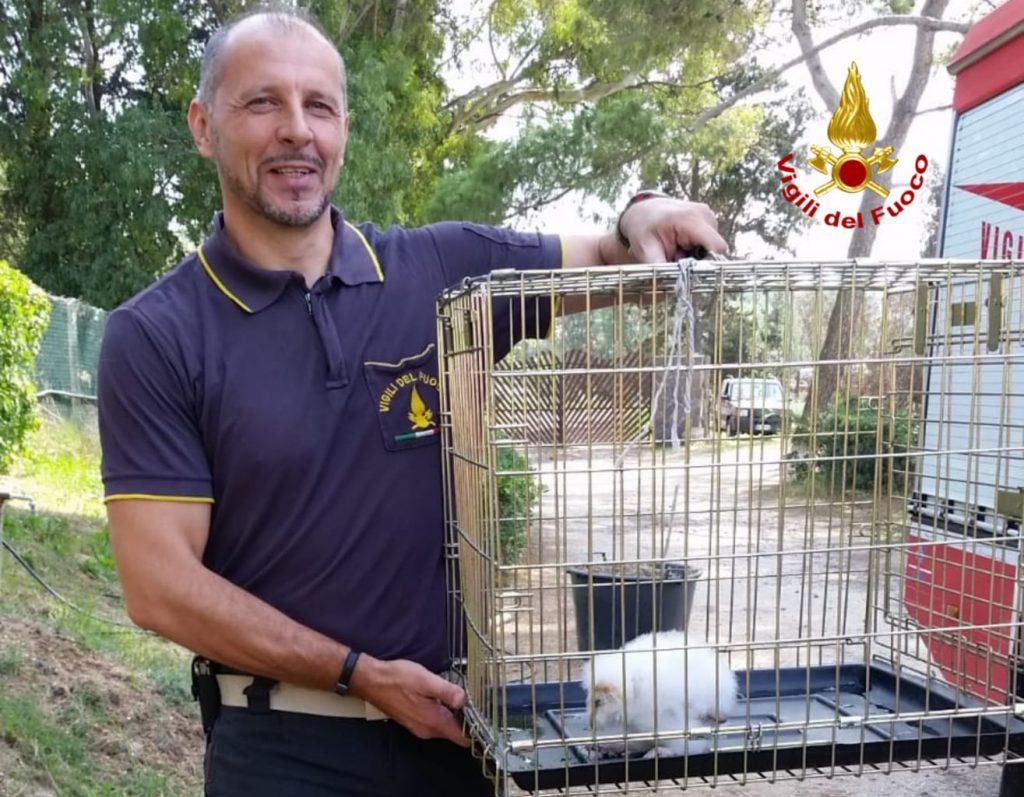 Soccorso pullo di barbagianni caduto dal nido: intervento ...
