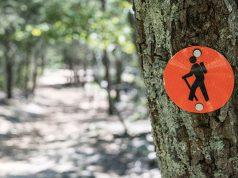 Parchi e foreste della Sardegna: alla ricerca di pace in mezzo alla natura