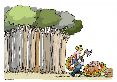 Indiscriminate deforestation