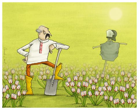 Alexander Lukashenko works in his garden. He grows white-red-white tulips.