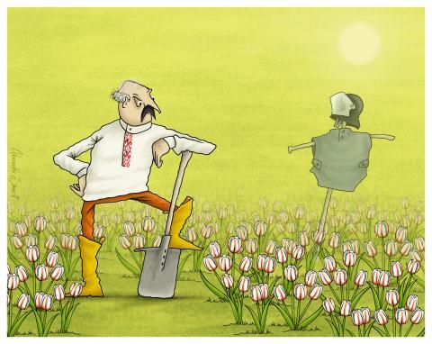 Alexander Lukashenko works in his garden. He grows white-red-white tulips.