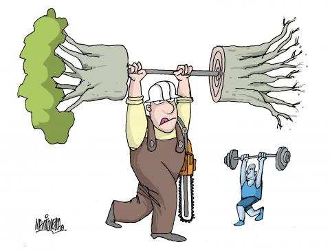 Exercising deforestation