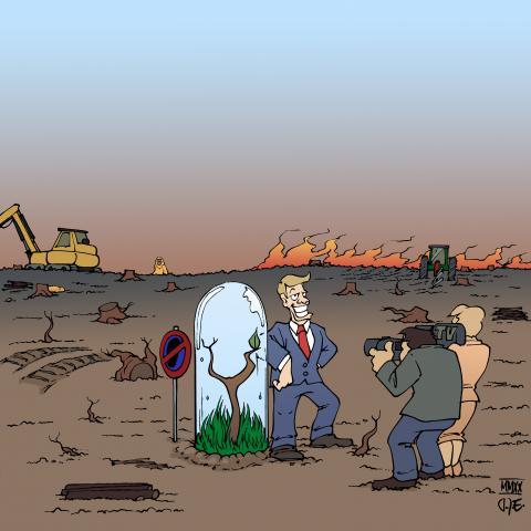 deforestation forest rainforest biodiversity plantation palm oil monoculture climate change Cartoon Timo Essner