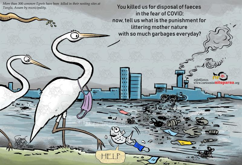 More than 300 common Egrets have been killed in their nesting sites at Tangla, Assam by municipality.