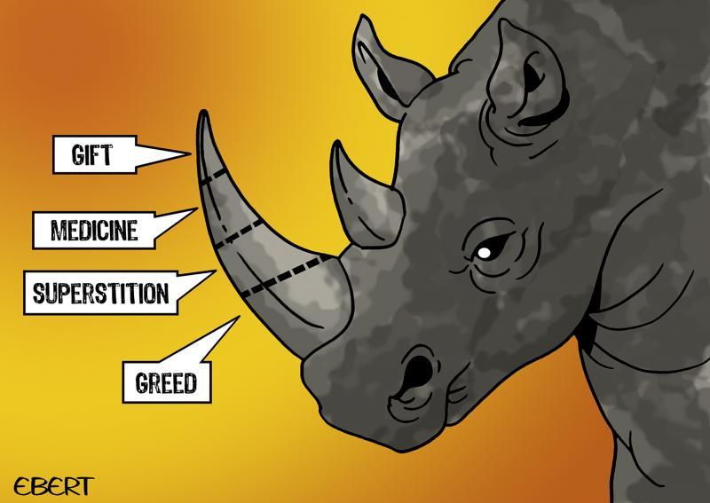 Cartoon about rhinos facing extinction