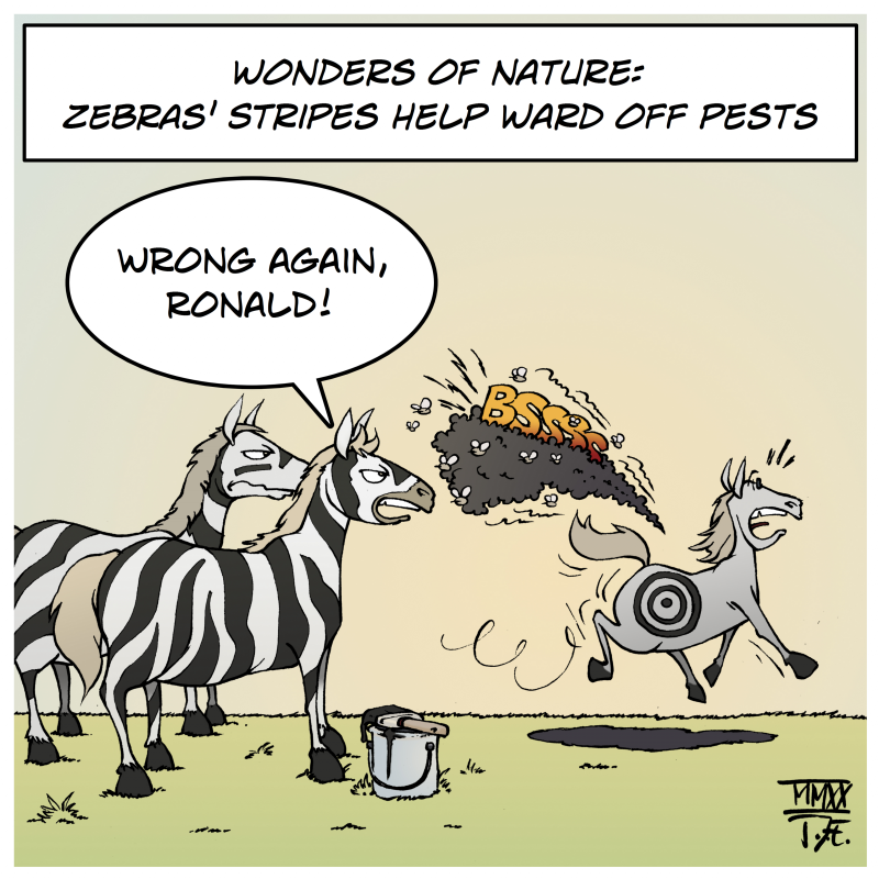 nature biology horses zebras stripes insects bugs pests ward protection mosquitoes horsefly horseflies botfly botflies camouflage cartoon Timo Essner