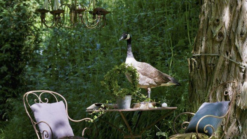 dekorace - vycpaný pták