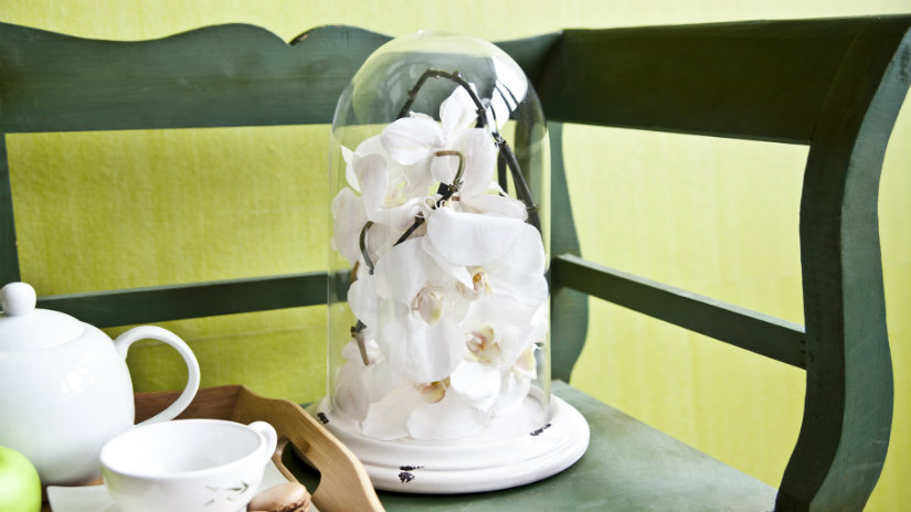 skleník na balkon s orchideí