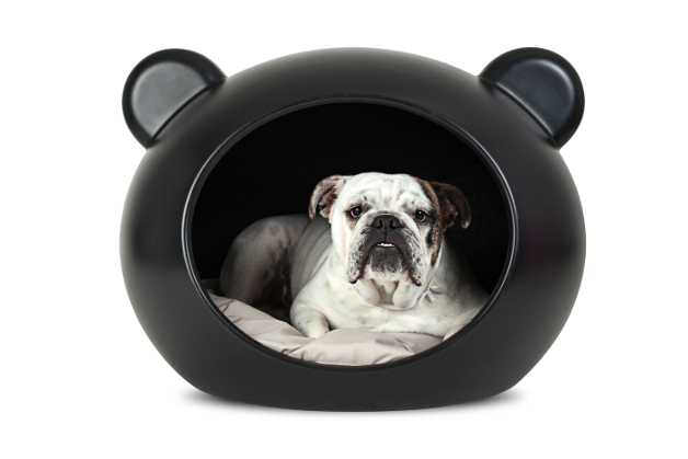 1-GuisaPet-Bulldog