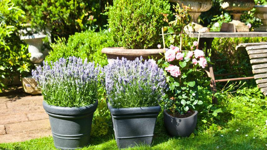 blumenbeet anlegen: so geht's | westwing, Garten und Bauen