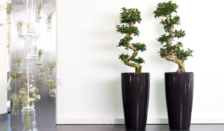 Dekorative pflanzen f rs wohnzimmer haus design ideen - Grose vasen fur wohnzimmer ...