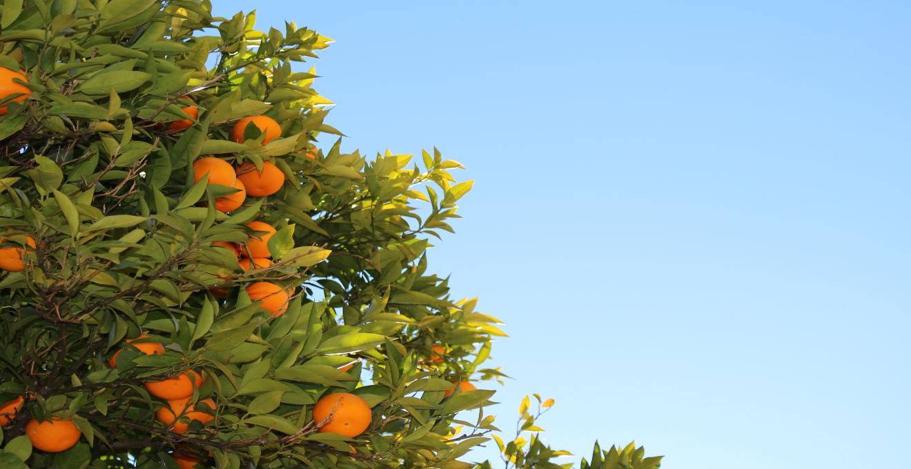 Rboles frutales todo lo que necesitas saber westwing for Plantas frutales