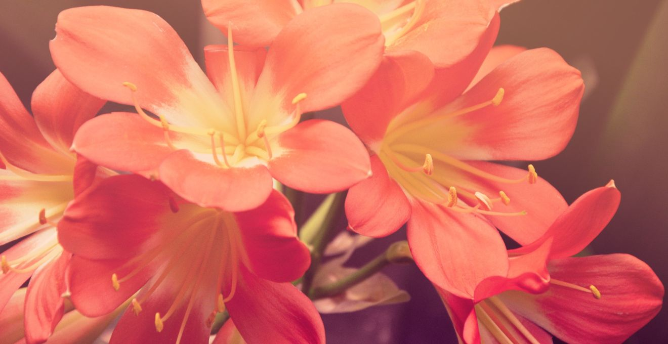 Flores de papel para bodas