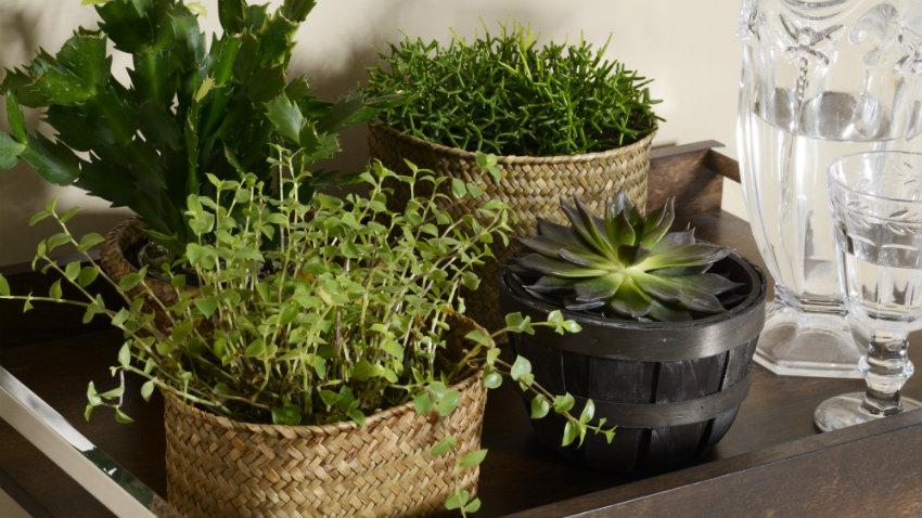 Plantas arom ticas un jard n culinario en casa westwing - Jardin de aromaticas ...