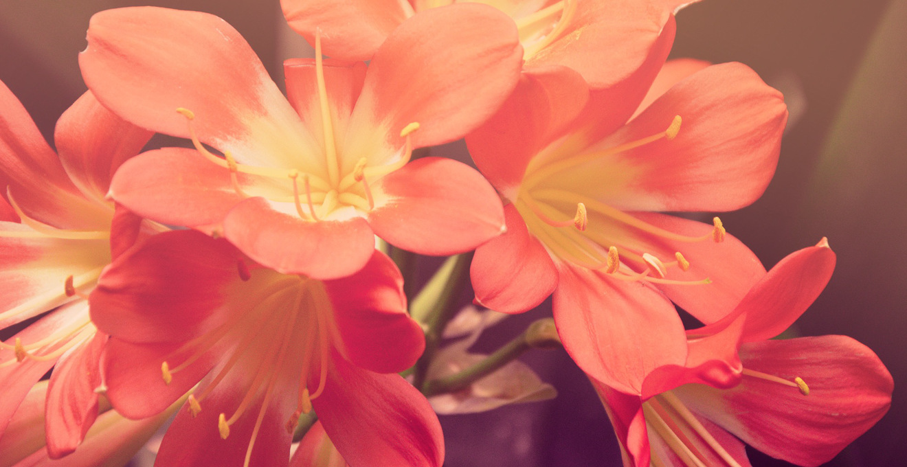 Langage des fleurs
