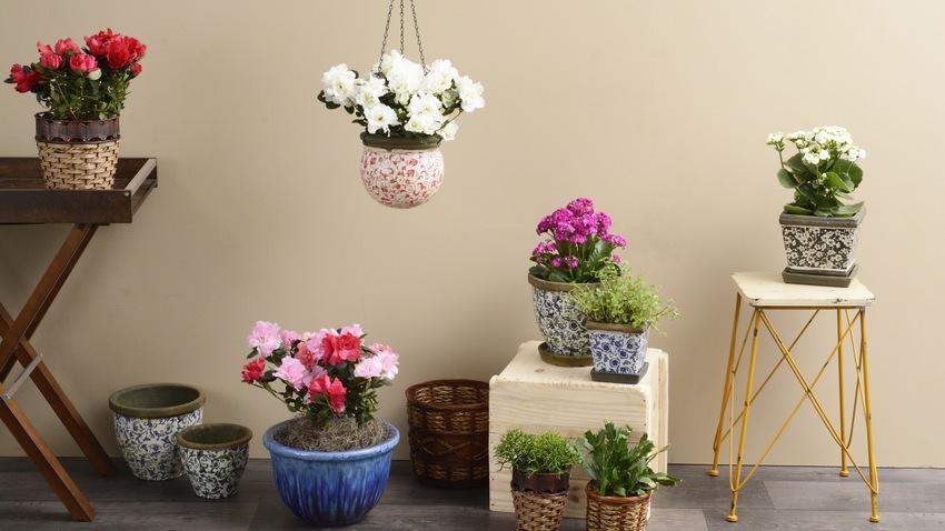 trouvez votre cache pot bleu westwing. Black Bedroom Furniture Sets. Home Design Ideas