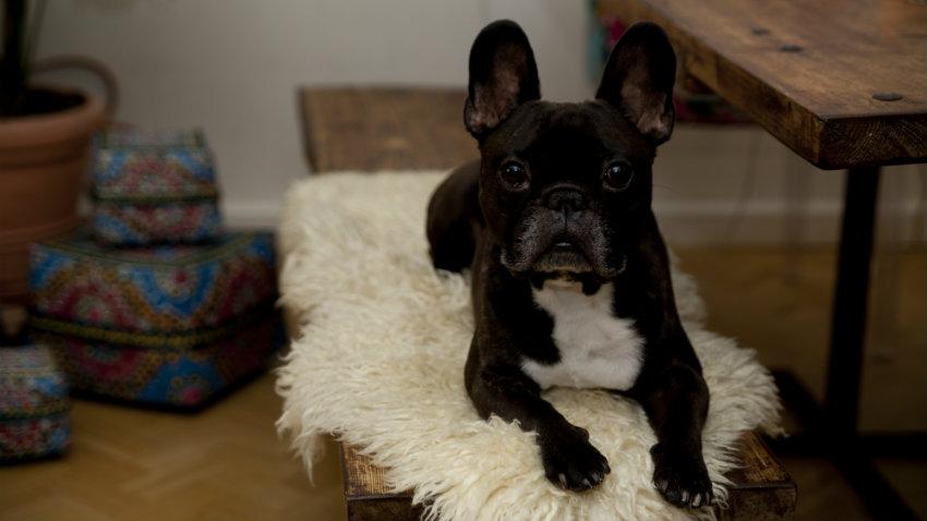 Ciotole in acciaio per cani