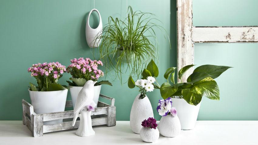 Dalani vasi da parete giardino verticale in casa - Giardino verticale in casa ...