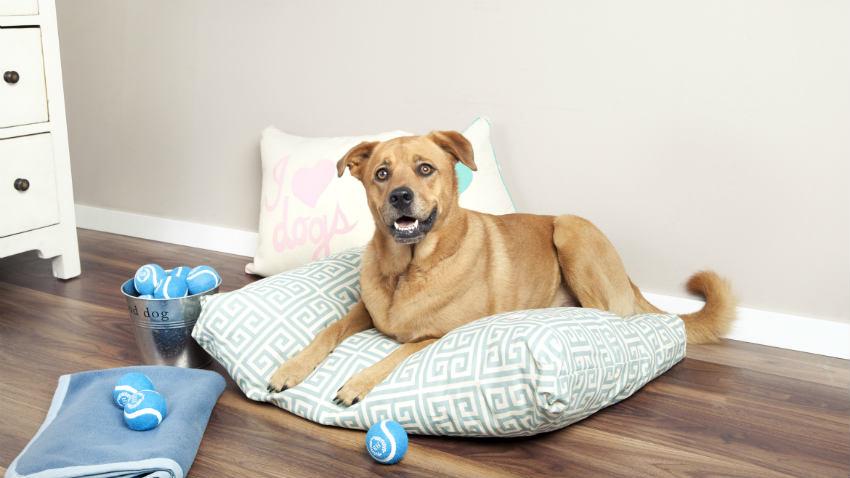 Cuscini per cani grandi