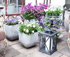 Rośliny balkonowe