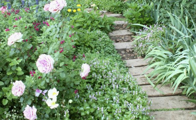 Ogród rustykalnym i alejka