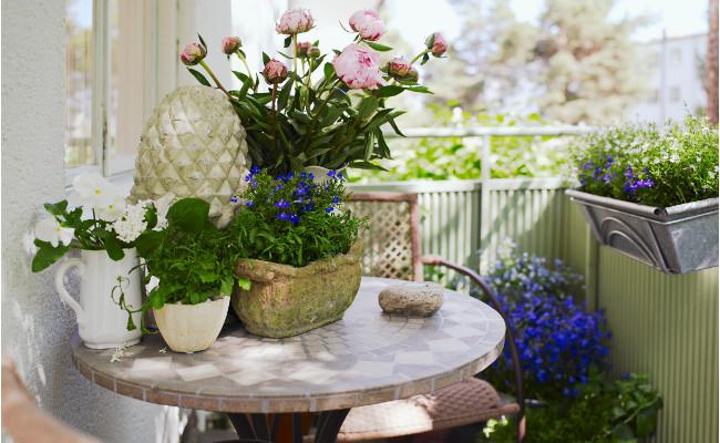 Ogród na balkonie i kwiaty cięte