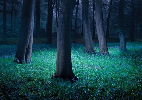 Hertfordshire Grimsditch Treeline, 2005