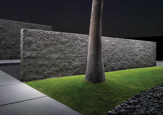 Tucson Palm Wall, 2004