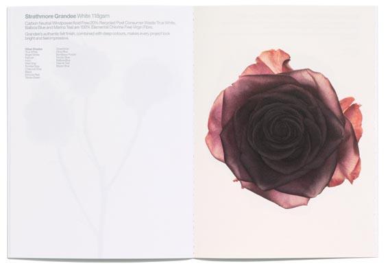 sea_rose_3_0.jpg - SEA: Mohawk Paper promo - 261