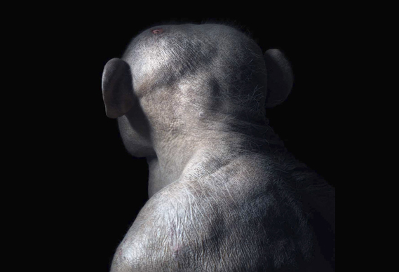 569_388_jambo_0.jpg - PhotoVoice lecture: Tim Flach - 4823